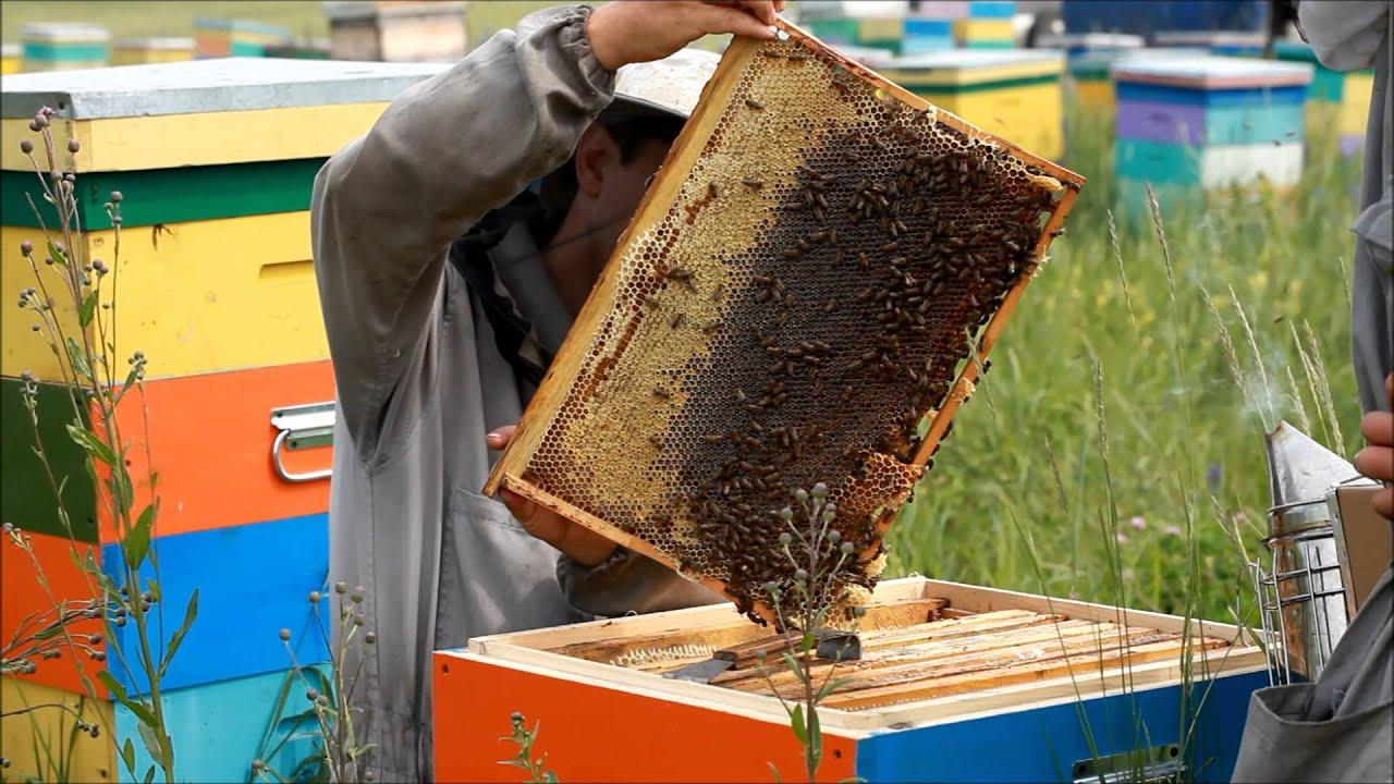 видеофильм про пчеловодство меньшей