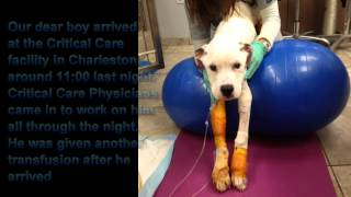Noahs Arks Dog Rescue Shelter - Freckles - A Sad Story But A Brave Little Lad - Needs Yourhelp