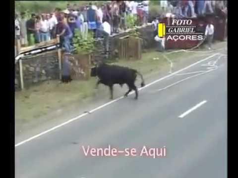 Toro ispan