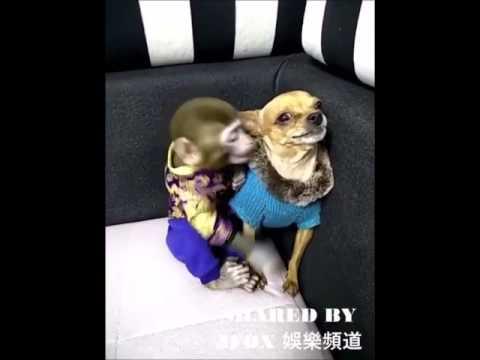 อย่ามายุ่งกับตรู ไอ้หน้าแตดลิง