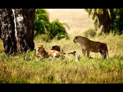 Safari i Tanzania & solsemester på Zanzibar