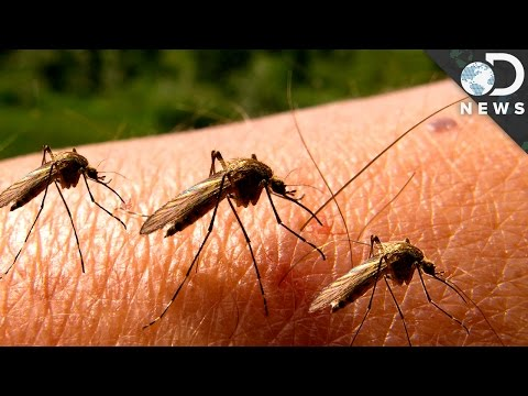 Why Can't We Get Rid Of Mosquitoes?