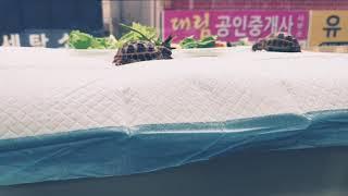 아기 육지거북이 여포 자룡이의 식사시간