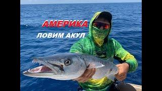 Русские на рыбалке в США Key West ловим акулу хищная рыба Карибский бассеин скоростной катерРы