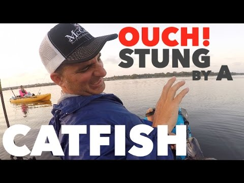 STUNG By GAFFTOP CATFISH Fishing Trout On Topwater -  Pensacola Florida