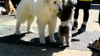 白熊とトイプー.
