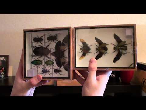 Www.StylishSouvenirs.ru жуки и насекомые в рамках и коробках