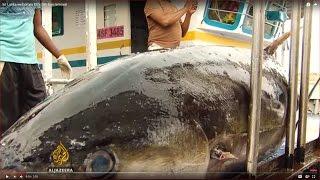 Sri Lanka welcomes EU's fish ban removal