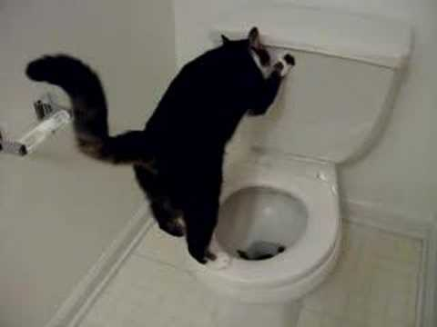 Toilet cat youtube for Commode kitty