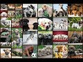 Dogs Jigsaw Puzzles Game | Kids Games | Puzzle | Part 1