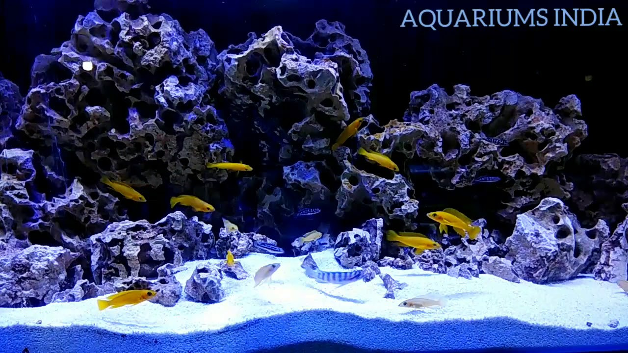 A Layman S Guide To African Cichlid Tank Naturepod