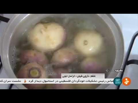 Iran Turnip harvest & BoiledTurnip as Traditional medicine, Boshrouyeh برداشت شلغم