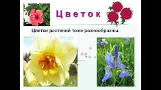 части растений 1 класс презентация