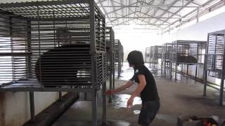 New feeding regime at Nanning Bear Farm