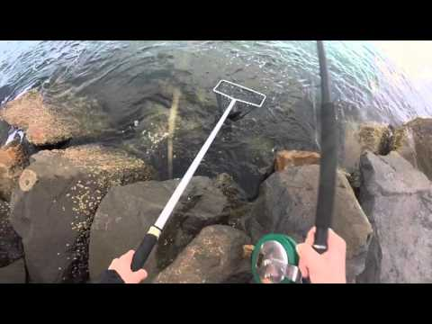 How to catch, clean and cook Luderick (Black Fish)