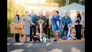 Рыбинск 7.07.19 Запись видеотрансляции с вечерних бестов Выставки собак