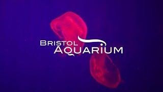 Bristol Aquarium | Explore Bristol