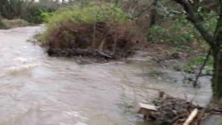 River Ashburn in flood at Rendells 1 January 2014 in Ashburton
