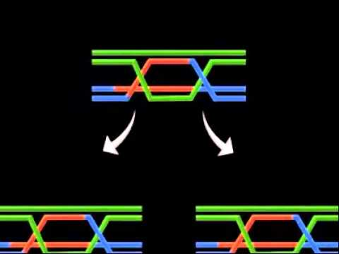 DNA double strand animation
