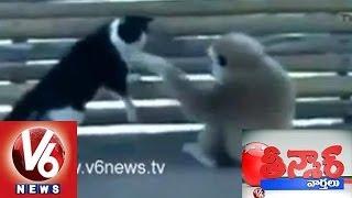 Animals Behaving As Humans - Teenmaar News