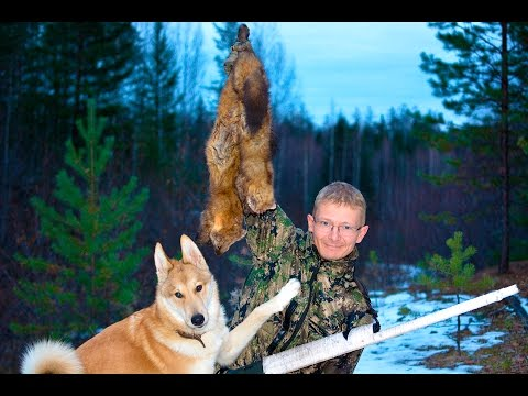 Охота в Подмосковье. Охотничий клуб: охота зимой и весной