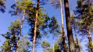 Tukkijoella (Vielä niitä honkia humisee)  - Pasi Kaunisto & Piirpauke