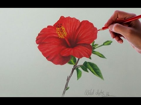 Drawing A Flower - China Rose | Easy And Simple Way |