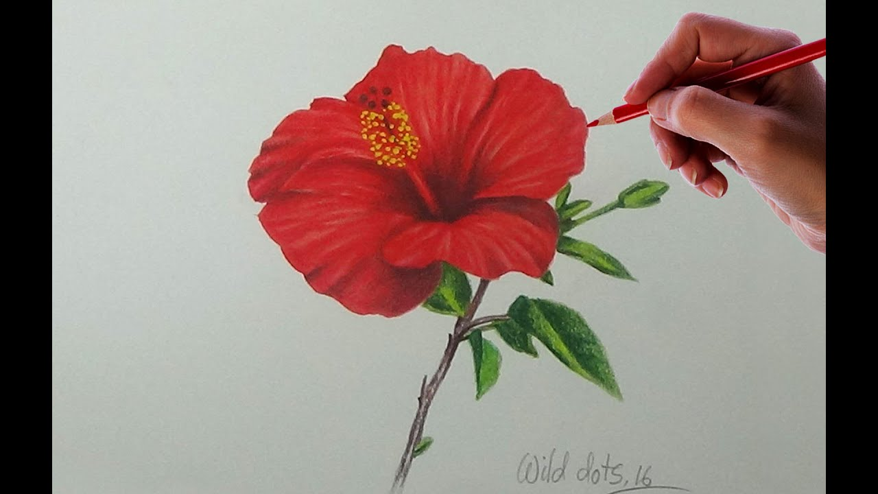 Drawing A Flower - China Rose | Easy And Simple Way | - YouTube