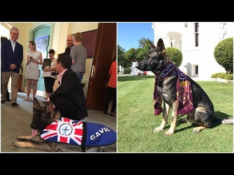 Good natured police dog gets fired from a job due the unsuitability to get better job opportunity