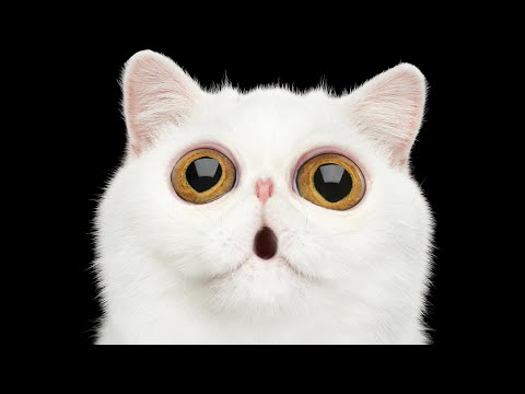 Best Cat Breeds with Big Eyes
