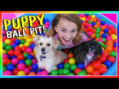 IT'S A PUPPY BALL PIT SURPRISE!   We Are The Davises