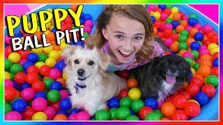 IT'S A PUPPY BALL PIT SURPRISE! | We Are The Davises