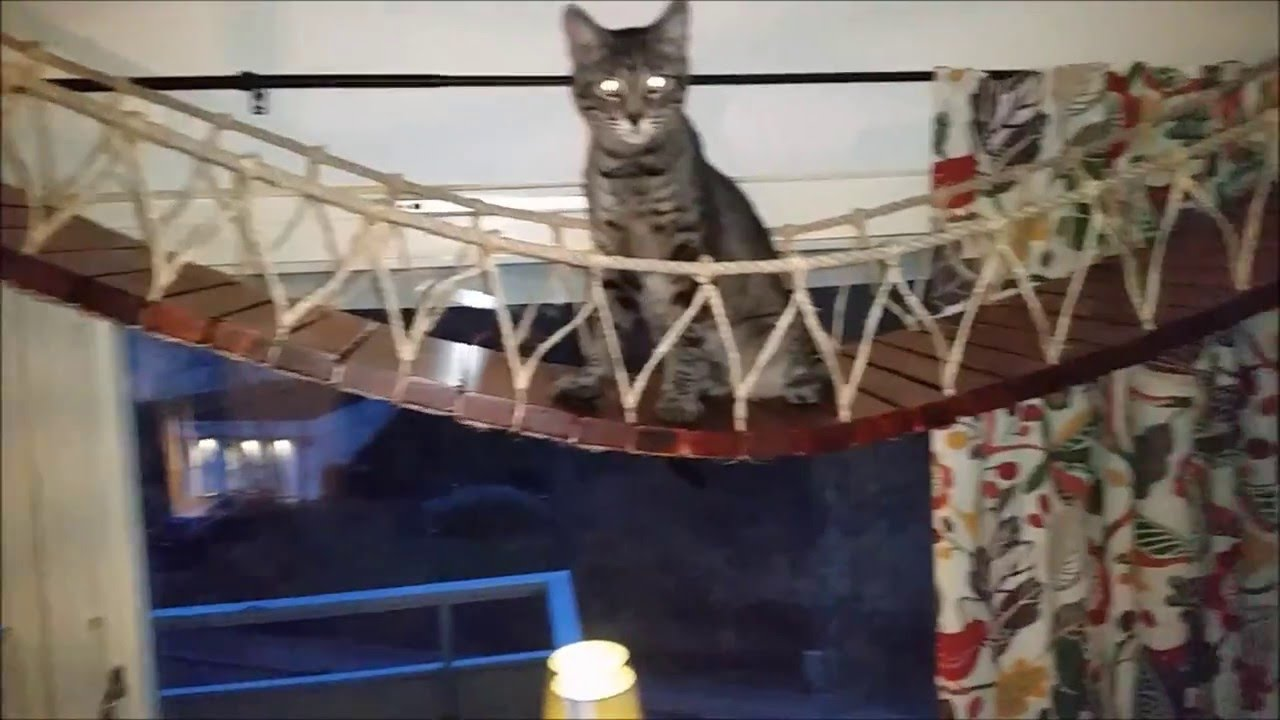 How to build a hang bridge for cats. - YouTube