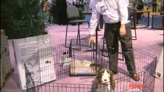 Icrate Double Door Folding Dog Crates By Midwest