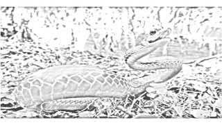Auto Draw 2: Andes Cloud Forest Snake