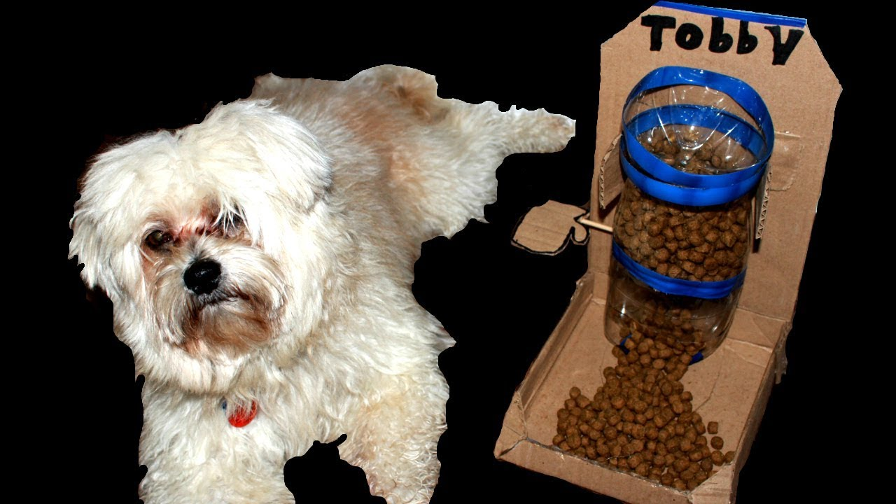 Diy Puppy Dog Food Dispenser From Coca Cola Bottle And Cardboard At