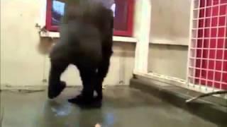 Приколы ! Смешной обезьян поёт и танцует
