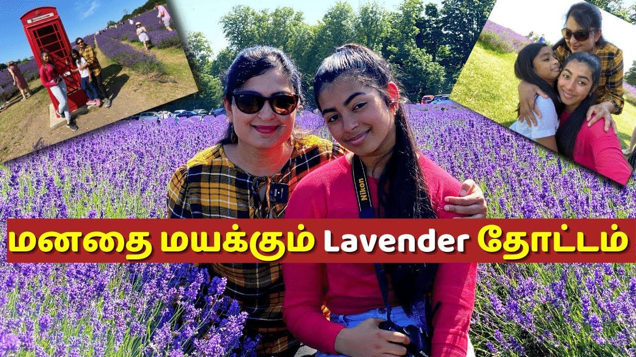 லண்டனில் அழகிய லாவண்டர் தோட்டம் / Lavender Farm VLOG /Chennai Girl In London #lavender #garden #farm