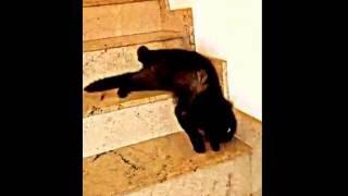 Ещё одно доказательство того, что коты — это жидкость...