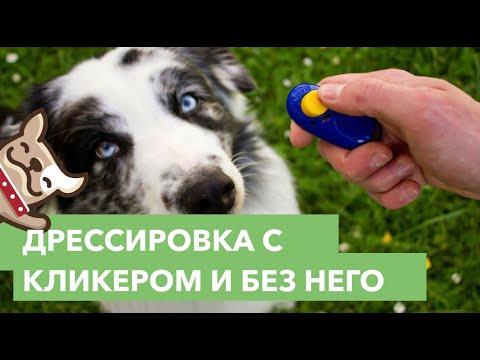 Дрессировка собак с кликером и без него. Советы кинолога.