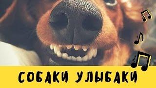 Собаки Улыбаки