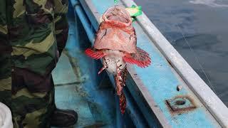 northern fishing рыбалка на краю света крайний север и прелести охотского моря