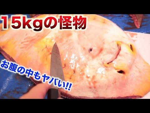 15kgの巨大生物のお腹切ったら出てきたものがヤバい!!