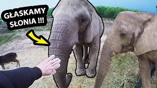 Głaszczemy Prawdziwego SŁONIA !!! - Jest OGROMNY !!! *Safari Aitana w HISZPANII (Vlog #374)