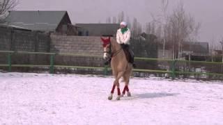 Обучение верховой езде в Алматы