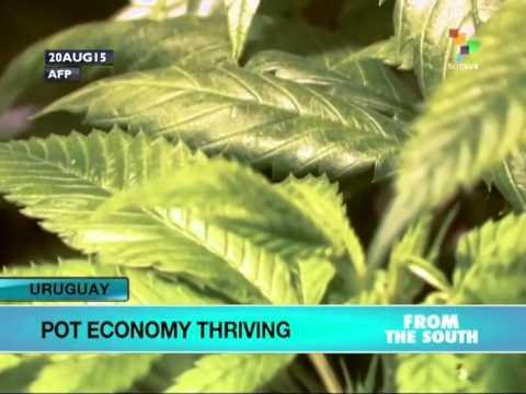 Uruguay: Pot Economy Thriving