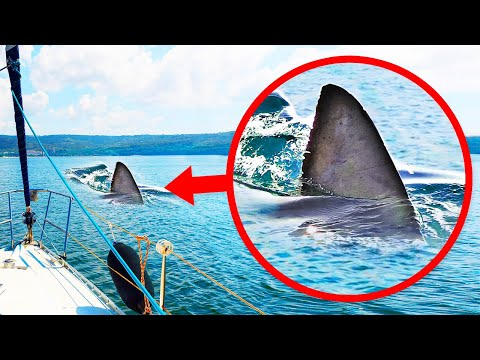 If You Spot a Fin in the Water, It May Not Be a Shark
