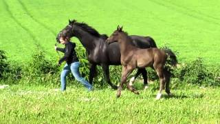 Hestkaers Taintless