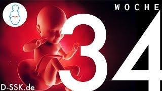34. SSW / 34. Schwangerschaftswoche