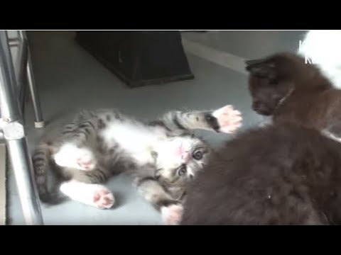 Kitten Is Shocked That His Mom Is Going To Be Jailed For 3 Years, Because.. | Kritter Klub